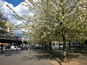 Kevät oli täällä vähän myöhemmässä kuin Budapestissä.