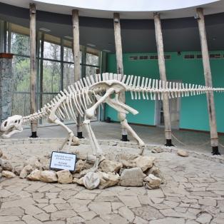Jotain dinosaurushommia alueelta oli löytynyt, sillä tämä oli ilmeisesti väsätty.